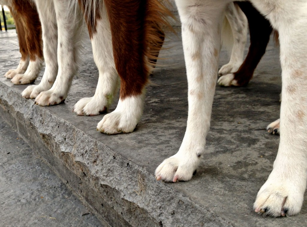 Can you name which set of paws belong to which of my dogs? From left to right .